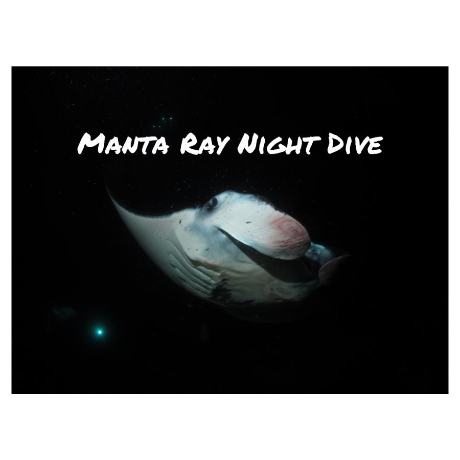 Manta Ray NightDive